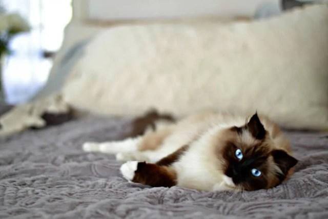 Cozy Minimalist Bedroom | Trend Book Ideas