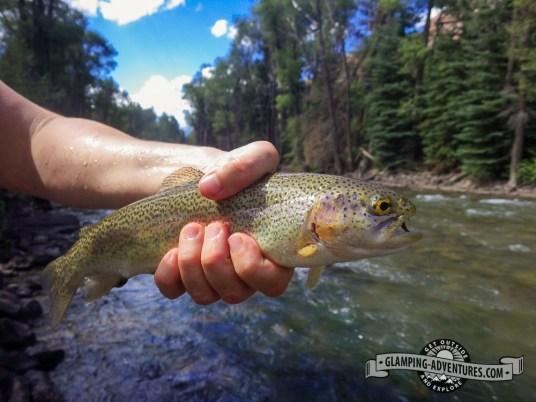 Rainbow trout near the camp.