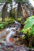 West Brush Creek. Sylvan Lake S.P.