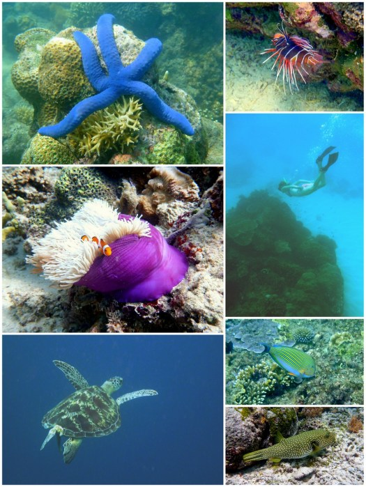 8Gili T Snorkel Trip-HoneyTrek.com