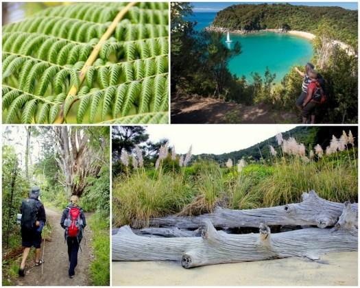 04 Able Tasman Hike-HoneyTrek.com
