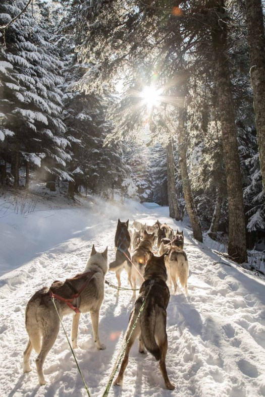 Whitepod - Dog Sledding-3338