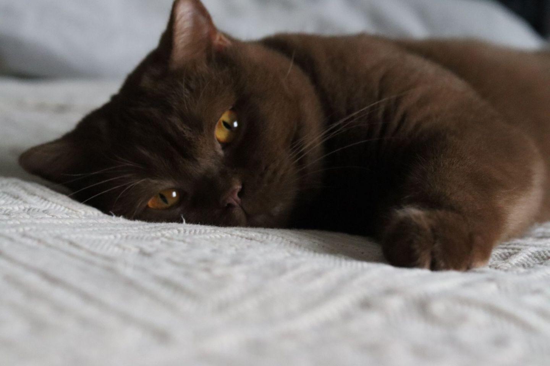 glamupyourlifestyle Katze Haustier ue-50-blog ue-40-blog