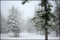 Quand j'ai demandé du soleil lundi, je me suis réveillée avec du soleil mardi. Alors est-ce que je peux avoir de la neige, s'il vous plaît ? Juste sur les Alpes, à partir de 800m... Juste pour que j'aille au ski... Hmmm ? (Station de ski Mont Sainte-Anne, Québec, décembre 2002.)