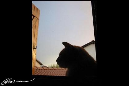Meow. Yé veille sour toua. L'ombre bienveillante... (Squatteur aléatoire, Craponne, juin 2003.)