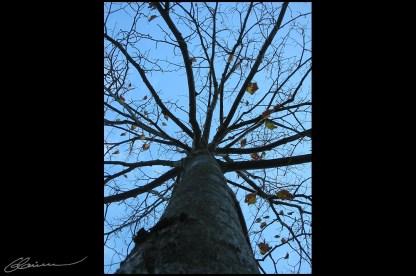 C'est trop haut, j'y arriverai jamais... (Devant l'HDV, Craponne, octobre 2003.)