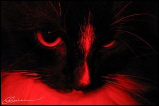 Evil cat. (Mon chat, Québec, Canada, avril 2004.)