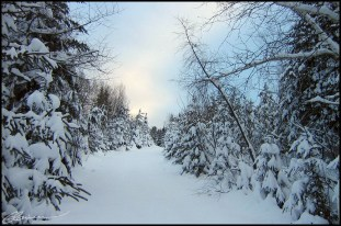 My winter wonderland. (Saint-Mathieu, Canada, décembre 2004.)