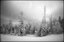 B&Winter. (Massif du Sud, Québec, novembre 2007)