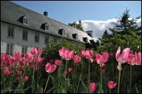 Blooming. (Domaine des Maizerets, Québec, juin 2009)