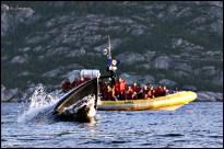 Ma photo de l'année: un petit rorqual en pleine alimentation. (Fjord du Saguenay, Québec, septembre 2009)