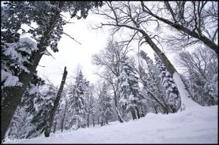 Enfin, un sous-bois accessible ! (Mont Sainte-Anne, Québec, décembre 2009)