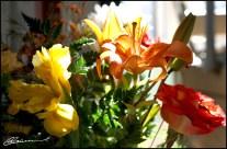 Un joli bouquet pour moi! Merci, l'Homme :) (Mercier, Québec, avril 2012)