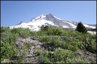 Surprise: j'aime les montagnes enneigées. (Mont Hood, Oregon, juillet 2012)