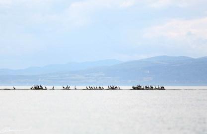 20150810_kayak_popo_kamou-01