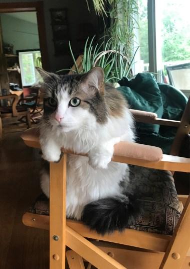 """La posture """"relax"""" de ce chat m'intrigue. (St-Mathieu-du-Parc, août 2017)"""