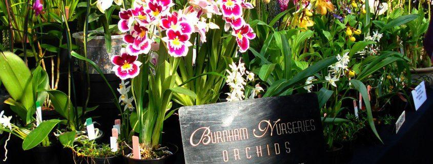 orchid-fair-in-glasgow2