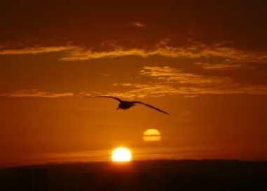 Photo: early bird.