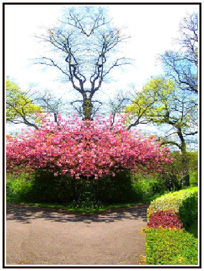 Photo: Glasgow Botanic Gardens.