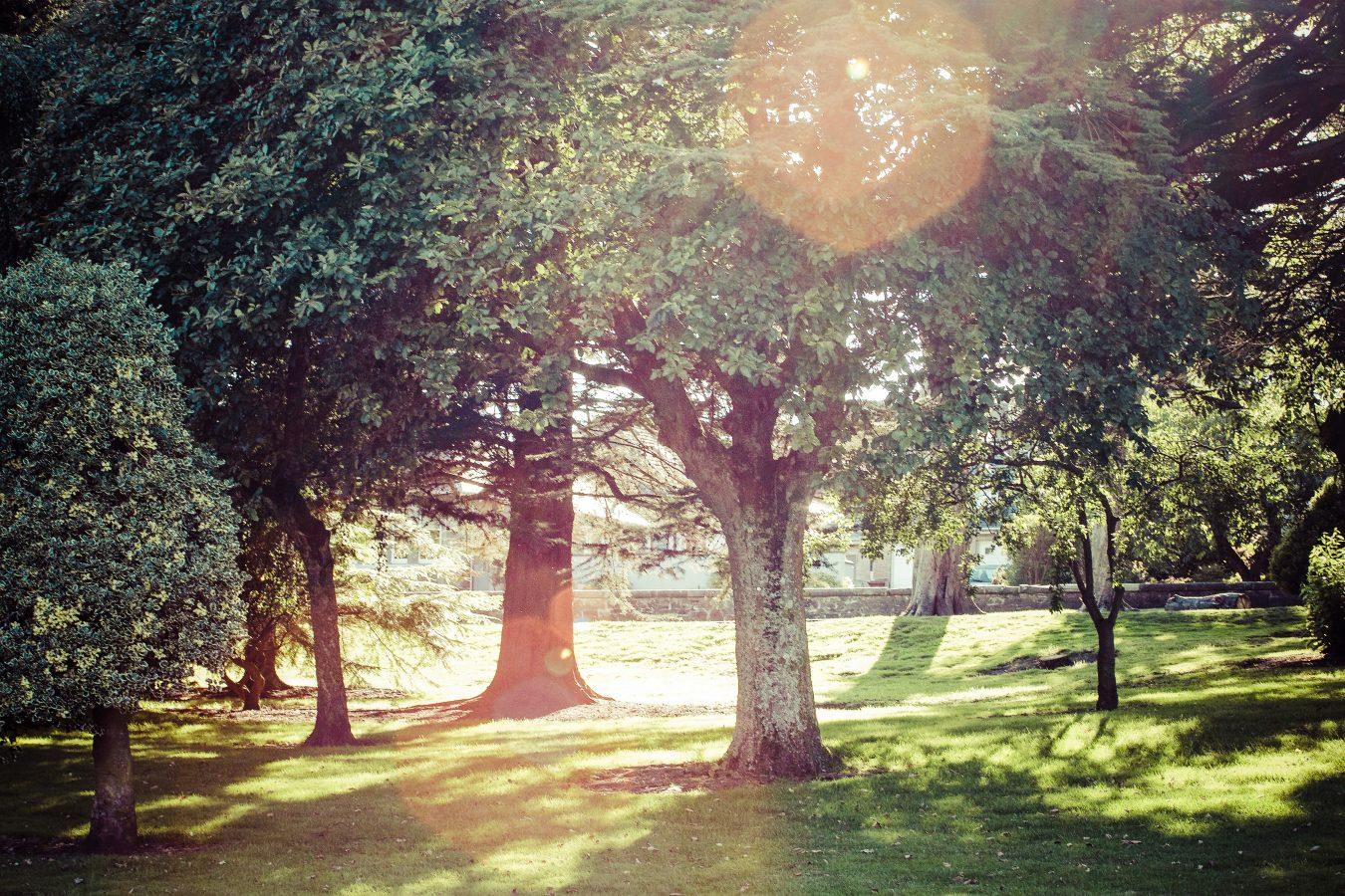 dumbartonparktrees