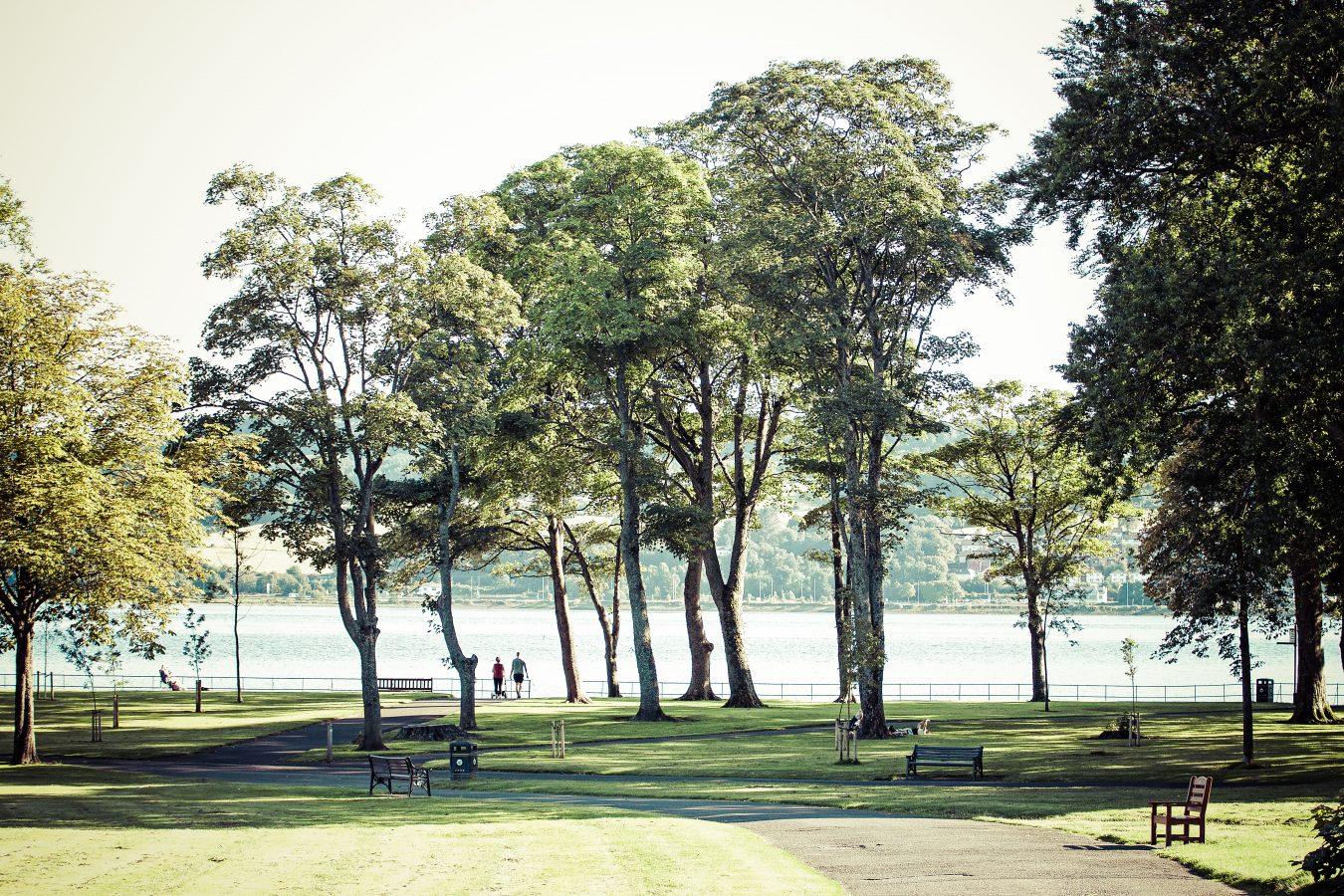 umbartonparktrees2