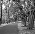<h5>Trees Kelvingrove Park</h5>