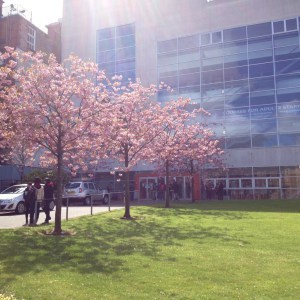 blossom centre for open studies