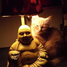 the cat and the buddha