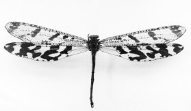 dragonfly2_the_nature_of_art_nouveau_small