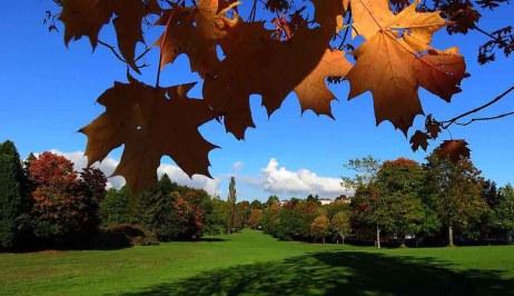 Indian Autumn. October in Glasgow Park
