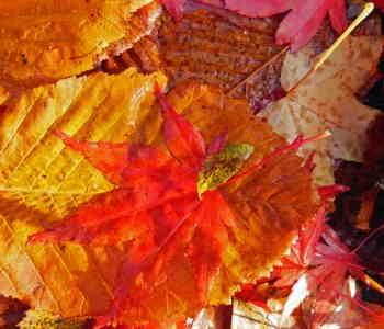 autumn voices
