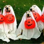 Halloween Dog Disco, 13th Note, 29 October, 2017