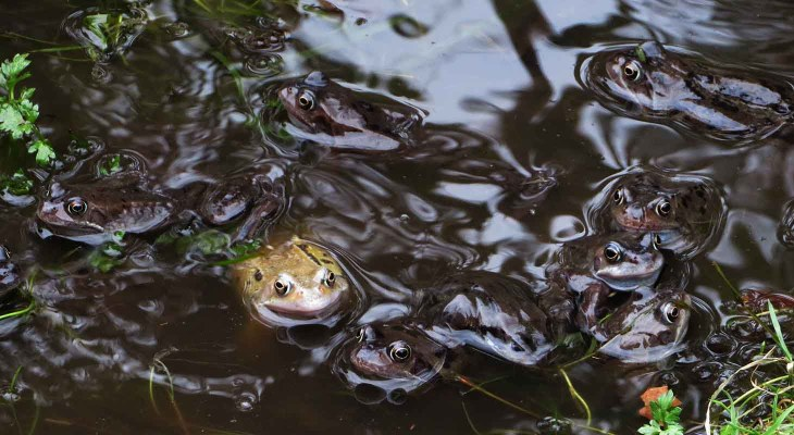 Froggie Went a Courting