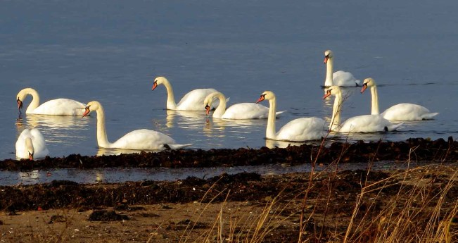 Swan Parade. Ayr
