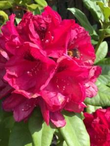 red flower leela