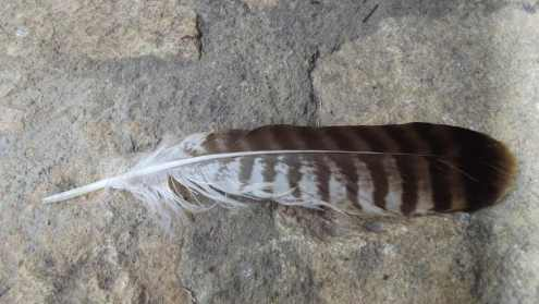feather of my aunt