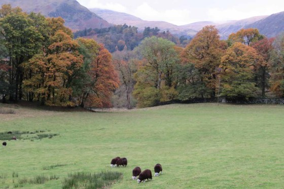 Sheep in a Lake District Landscape