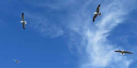 Flight Pattern. Empire of Birds seagulls
