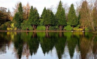 Evergreen.Rouken Glen in November