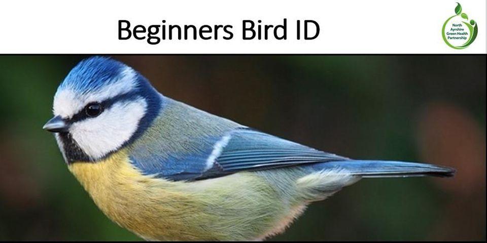 beginners bird id