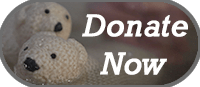 Polar bears who ask that you donate to GHF