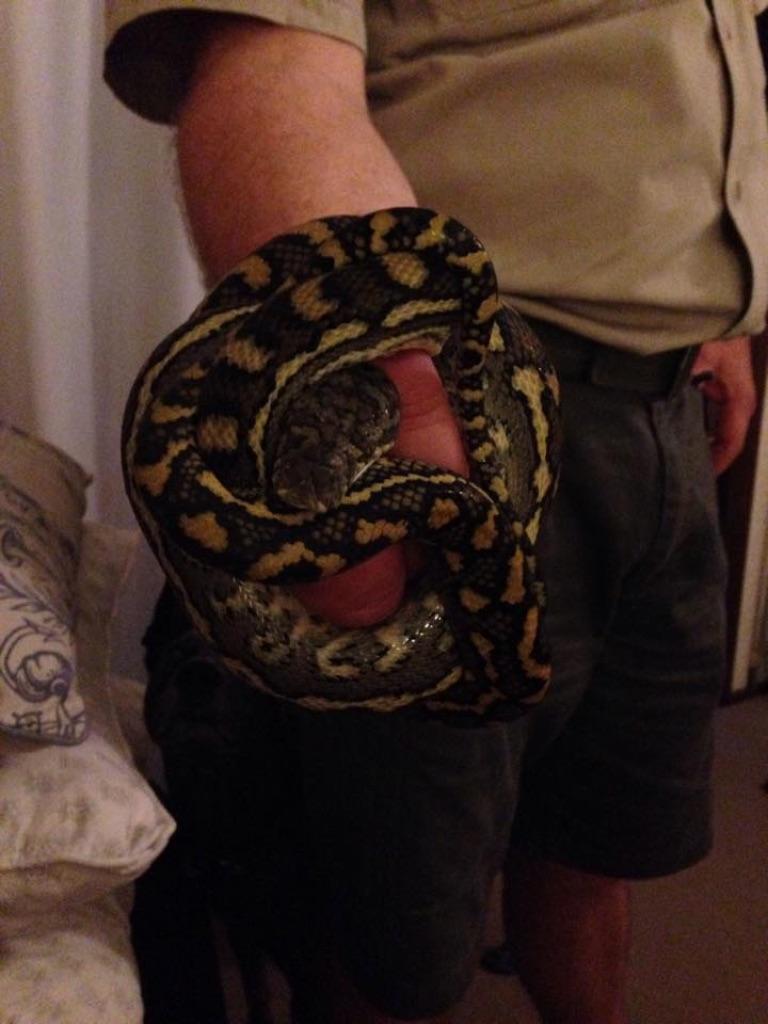 Rob Bland Mfezi Snake Catchers Sunshine Coast 03
