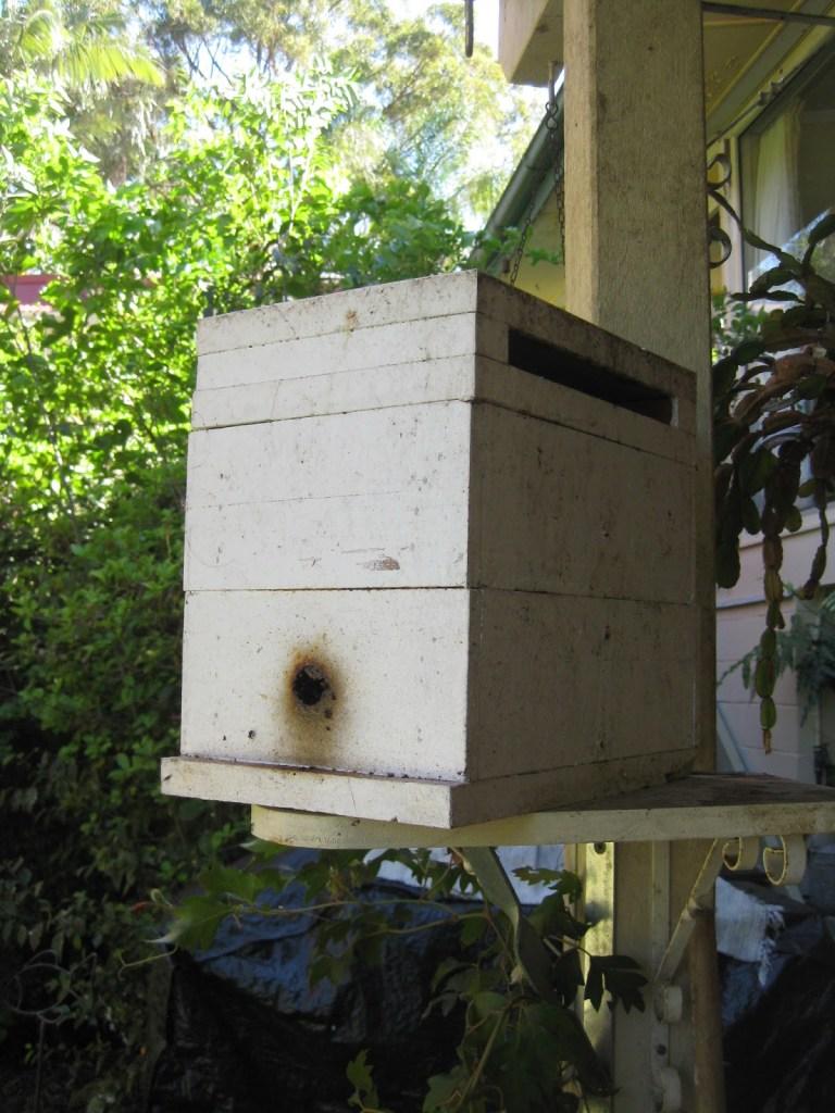 Native Australian Stingless Bees