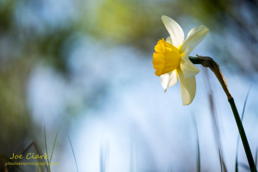 Spring Flower 2 by Joe Clark www.glasslakesphotography.com