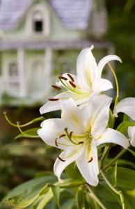 Flower botanical fine art photography. By Joe Clark.