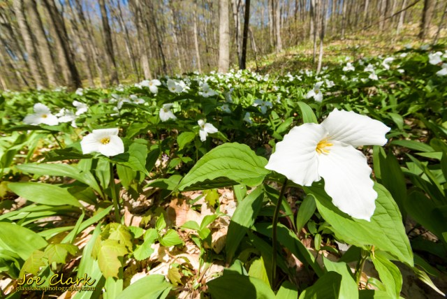 trillium good hart farm little traverse conservancy Joe Clark photographer