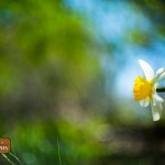 Daisy by Petoskey photographer Joe Clark Glass Lakes Photography