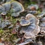 Tree lichen in Spring