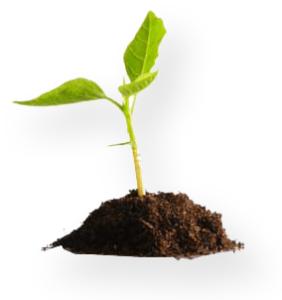 plant-seedling