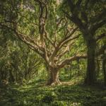 secrets tree